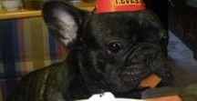 Thats My Dog / My French Bulldog His name Maci