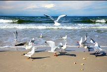 Piękno natury! / #Beauty of #nature, #sea, #forests, #lake. Czyli zobacz jak pięknie jest na pomorzu zachodnim!