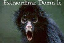 RoMemes / Romanian memes