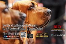 Recent dog shows / Dog show ringside and official photos