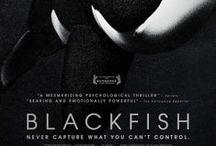Jan -Feb 2014 film choices  / Movies