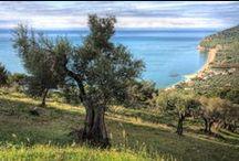 Olivenöl / extra natives Olivenöl aus Apulien/Süditalien