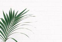 Leaves / palm ● leaves