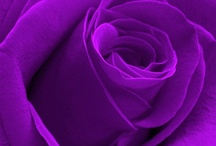 * Purple / It's all about purple! ; pins van andere sites.