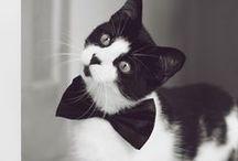 Cats!!! / miaou...miaou...miaou!