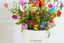 Flowers!!! / colourful......