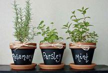 Edible Garden / Inspiration for creating edible gardens at Sullivan Vineyards. / by Sullivan Vineyards