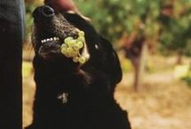 Napa's Harvest Season / by Sullivan Vineyards