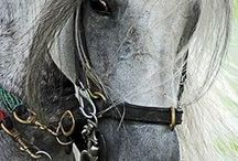 Equus:The Horse / Re-pin to your heart's content.I like to share.No limits per board per day.Zip.Go nuts. / by Jackie Reed