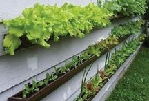How Does Your Garden Grow? / Ideas for my garden present and future.