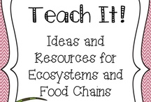Animal Food Chains / by Pinning Teacher