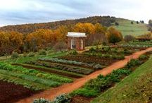 "The Revolutionary Garden / Thomas Jefferson meticulously organized and recorded the results of his garden each year. Enjoy these views of Monticello's ""roots, fruits, and leaves"" and ideas for taking your homegrown harvest to the table.  / by Thomas Jefferson's Monticello"