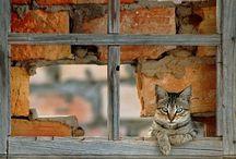 CAT IN THE WINDOW =^。^=