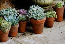 Gardening & Landscaping //