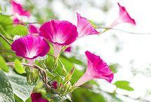 GARDEN- FLOWER  ❀ ❀
