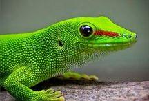 lizards/jaszczurki