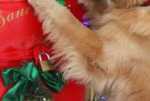 Fotos mascotas / Fotos mascotas adorables