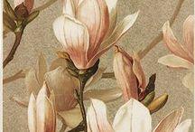 Bedroom artwork inspiration / Florals, botanical drawings, Indian art, Egyptian art, naturalist drawings