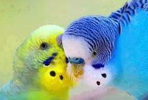 Exotičtí ptáci klecí a voliér