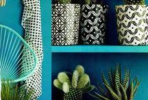 cactus! / Cactus trend ...