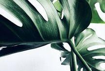 urban jungle / greenery / inspiration 17-18