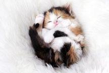 Cute & Pretty Pics Of Animals