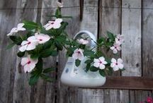 Chaleiras, bouilloire, hervidor, bollitore, kettle... / bouilloire, hervidor, bollitore, kettle and flowers