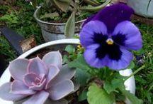 Panelas Velhas com flores, vasi di fiori,  / Lembrança do tempo da minha avó, panela furada virava vaso!