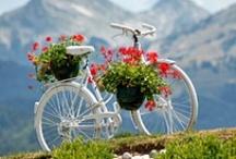 Bicicletas / by Madalena Valcanaia