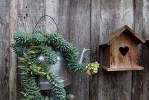 Casas para pássaros e comedouros / Casas para pássaros e comedouros