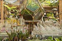 Jardín/garden