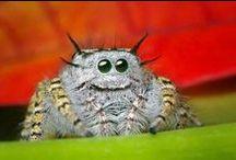 Spiders butterflies ect