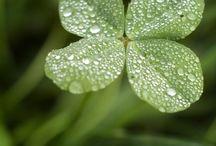 Vihreä / Vihreää ❇️