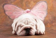 Pets / by Tanya Rose