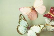 Butterflies / by Silvia Bolchi