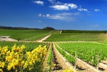 Oh-La-Languedoc! / Languedoc-Rousillon is the most productive wine region in the world with approximately 300,000 hectares of vines.  Discover this region with Winerist enjoying our best wine hotels, wine and gourmet tours, and offers in this region. To find out more about Languedoc visit: http://www.winerist.com/regions/region/languedoc-roussillon  / by Winerist