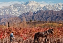 Mighty Mendoza / Mendoza, with the mighty Andes as a backdrop and over 300 days of sun a year is a wine lovers paradise and a winemakers dream. To learn more about wine travel in Mendoza visit: http://www.winerist.com/regions/region/mendoza / by Winerist