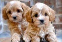 PUPPIES / Puppy -Dog breeds