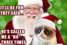 grumpy cat humor / by Judith E