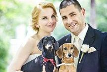Pets and Weddings-I Do! / How to include your fur friend on the big day