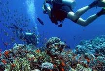 Excursies Egypte Hurghada / Behalve zon zee en strand heeft Hurghada nog meer te bieden. Wat t denken van duiken, snorkelen, jeep safari, pyramide bezoeken, duikboor toch maken