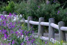 {H O M E} :Flowers