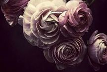 its time...ranunculus, you deserve your own board. / just adore these flowers...they take my breath away.