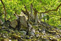 Nationalpark Kellerwald-Edersee im Waldecker Land / Impressionen aus dem Nationalpark Kellerwald-Edersee