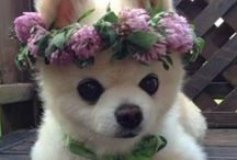 ultima cuteness