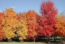 Native Ontario Trees / Looking for native trees to enhance your landscape? You should be! They allow you to support biodiversity as well as control pests and diseases! To top it off you will end up with stronger, more beautiful plants. What's not to love?
