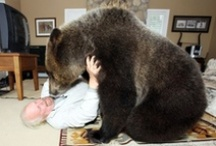 Animal Fun / Fraser Valley is open to many wildlife, bears, geese, dogs, cats, birds of a variety, squirrels and more.