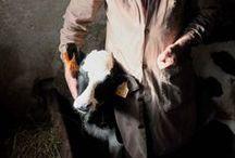 Vétérinaires / Des photos de vétérinaires, nos ayants-droit.