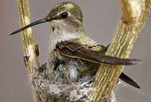 gniazda klatki  karmniki - slot cage feeders