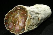 skamieniałe drzewo - wood fossilized tree